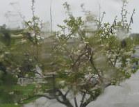 Baum_im_regen